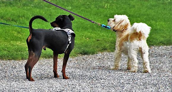 Bild från insändare, vädjan till hundägare