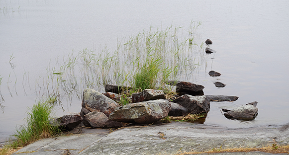 Stenar och vass.