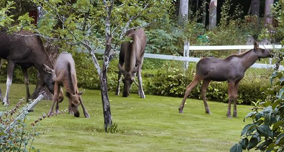 Visar på ett ovanligt besök hemma i trädgården
